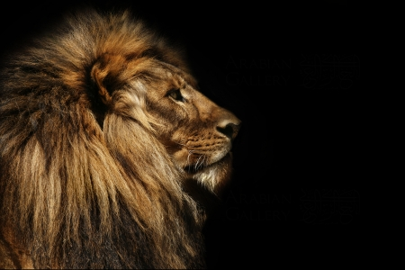 CECIL NUMBER 9